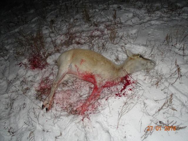 Результат незаконной охоты